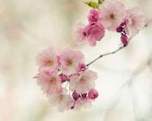 Cherry photograph - 5 x 5 fine art photography print - romantic, cherry blossom tree, pink, white, sweet, spring, photograph