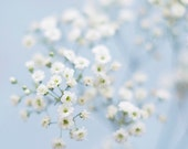 Flower photo - fine art photography print -  baby's breath soft light blue dreamy nursery decor pastel spring photograph