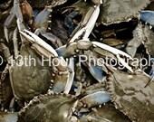 Basket of Crabs - 8x12 Fine Art Print - Baltimore