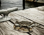 By The Dock Crab - Fine Art Print