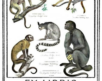 Five Monkeys Bookplates (Personalized or Blank)