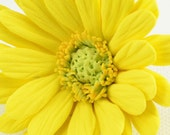 100% of the proceeds of your purchase will go to The Leukemia & Lymphoma Society - Miniature Yellow Clay Gerber Daisy Brooch or Hairpin