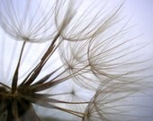 Dandelion Photography Neutral Soft Home Decor 10x8 Print Dandelion Part Blown...