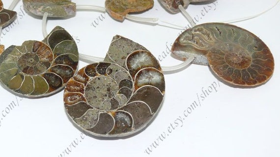 25-55mm Conch fossil stone beads,crystalloid loose bead