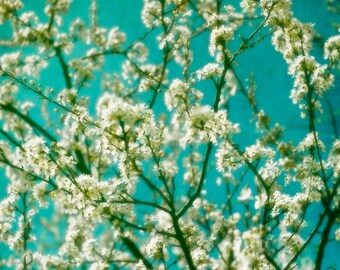Blossoms of Spring -  Fine Art Photography Print