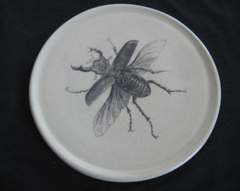 Stag Beetle Plate