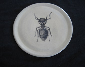Ant plate / coaster