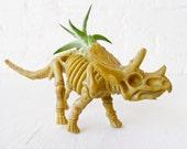 Air Plant Triceratops Dinosaur Garden - Spring Gift
