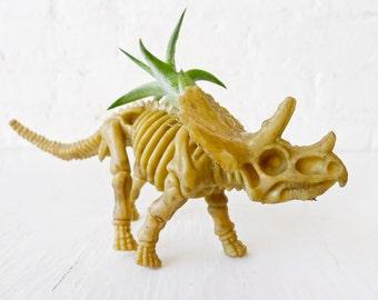 Triceratops Dinosaur Air Plant Garden - Spring Gift
