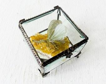 10% SALE - Beveled Glass Jewelry Box - Spotted Sleeping Zanna Butterfly Specimen on Gold Citrine Quartz