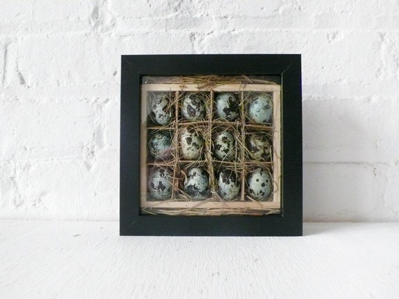 Real Quail Eggs Nest Crate in Shadow Box
