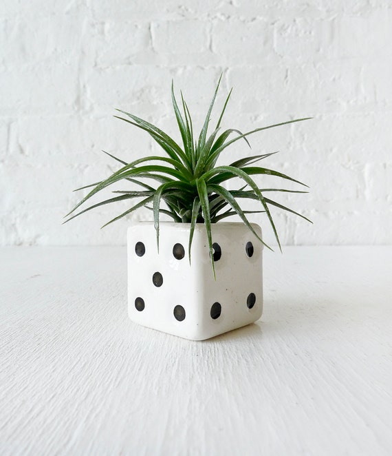 Air Plant  in Vintage Dice Salt Shaker Garden