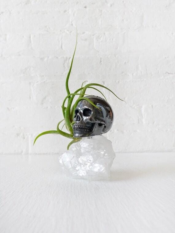 Black Death Hematite Carved Skull on Apophyllite Crystal w/ Air Plant Garden Snake