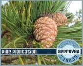 PINE PLANTATION Fragrance  Oil, 1 oz