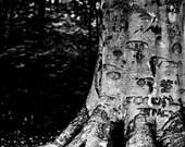 Treeffiti 5x7 Inch Photographic Print