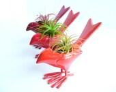 Birdies, Sunset collection