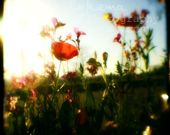 nature home decor boho wildflowers flower landscape vintage red blue green sky colorful - Break of Day -  Fine Art Photography Print