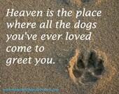 Heaven is Paw Print in the Sand 5x7 5 x 7 Printed fine art photo