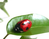 Edible Sugar Lady Bugs, realistic candy/edible embellishment 50