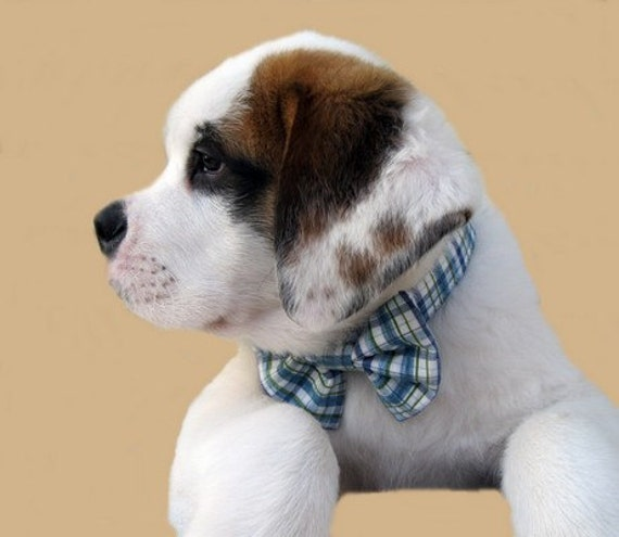 Blue Plaid Bow Tie Dog Collar The Day Sailor