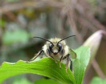 Bee on Blackberry