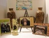 Chimp Eden Chimpanzee Greeting Card Set 2