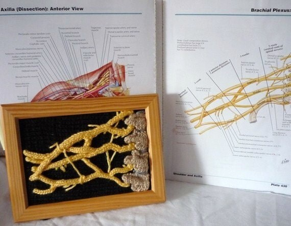 Anatomically Correct Knit Brachial Plexus