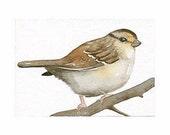 SPARROW - Aceo Art - Original Watercolor painting by Lorisworld
