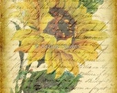 Vintage Cottage Botanicals 6 sunflower collage sheet digital printable collage sheet ATC ACEO backgrounds
