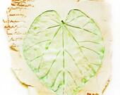 Nature Journal Notes - Bolivian Black Oak Leaf in Pastel Orange