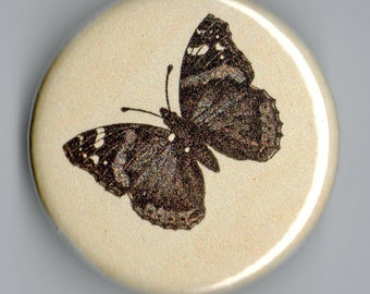 Red Admiral Butterfly Life Cycle Vintage Image 1.25 inch BUTTON trio