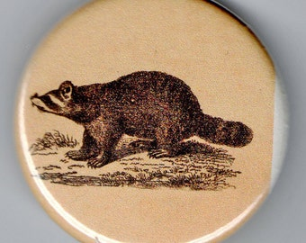 Raccoon 1.25 inch BUTTON Vintage Image
