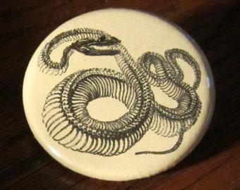 Snake Skeleton 1.25 inch BUTTON Vintage Image
