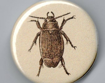 Dytiscus Marginalis Beetle 1.25 inch BUTTON Vintage Image