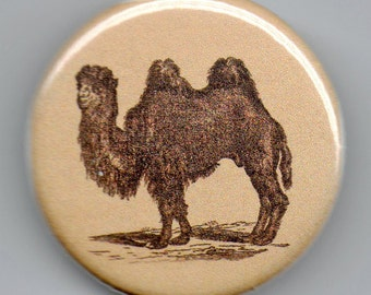 Dromedary/Camel 1.25 inch pinback Button Vintage Image