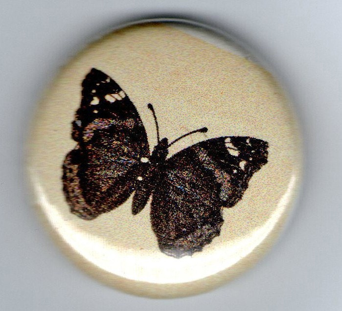 Red Admiral Butterfly Life Cycle Vintage Image 1 Inch BUTTON