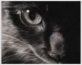 Black Beauty Cat Art Print Glossy Goth Zindy Nielsen