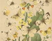 Lovely 1882 Antique Lithograph Plate of White Butterflies and Wildflowers