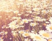 daisy photo, flower photography, little girls room decor, summer print, yellow nursery art, white decor, garden art