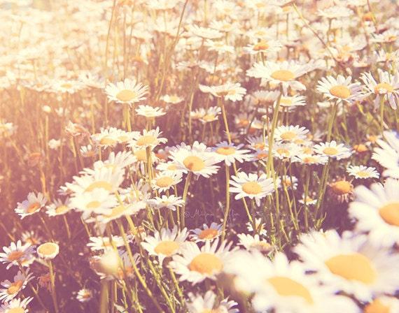 daisy photo flower photography little girls room decor