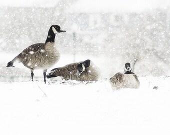 Winter Snow Storm of Geese- Original Photograph -