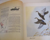 Vintage 1948 book Sport Afield Know Your Ducks and Geese