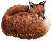 Original  Watercolour Red Fox 7.. . NOT A PRINT ..Original Painting