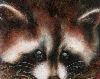 raccoon-- ACEO PRINT open edition - animal collectible card