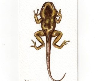 Original ACEO tadpole ..Original Painting Watercolor Card