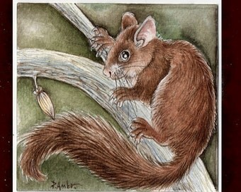 Original ACEO dormouse.. Original Painting Watercolor Card collectible fine art