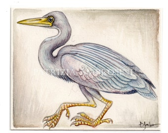 Aceo original - Eastern Reef Heron  - card small painting collectible bird blue