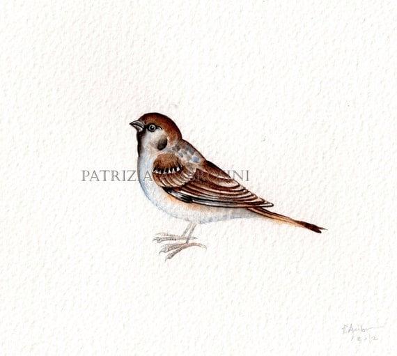 Original 9x7 Watercolour Sparrow......NOT A PRINT ..Original Painting animal art bird