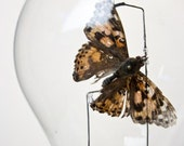 Upcycled light bulb with Butterfly RESERVED for Gema Eve