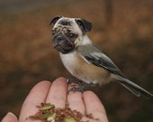 Funny Animal Photography - Half Bird Half Dog Print - Pug Dog - Chickadee - Bird Body - Pug Face - Collage Art - 4x6 Print